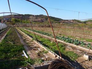 Het landbouwproject Radboud Spruit Grafkisten Pakistan